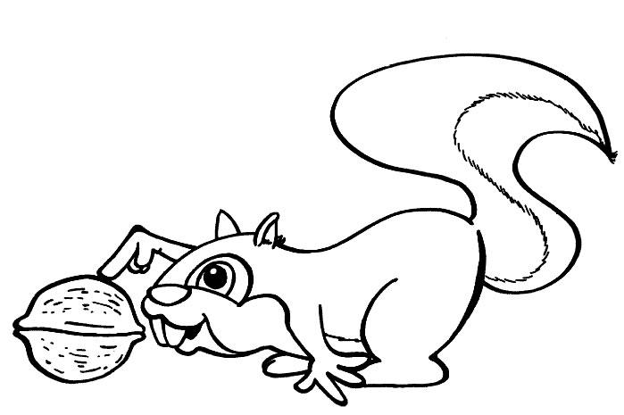 coloriage ecureuil 1 - Coloriage Cureuil
